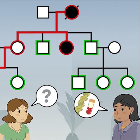 Family Genetics Vital For Understanding >> Hmx Genetics Hmx Harvard Medical School